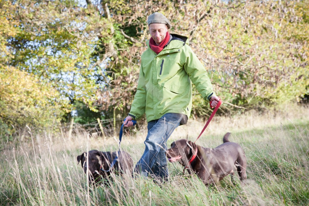Dog Walker Bristol Chocolate Labradors